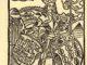 COLOMBO-De-insulis-in-mare-Indico-nuper-inventis-FFERNAD-rex-hispania-80x60