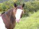Cavallo-Nunki-80x60