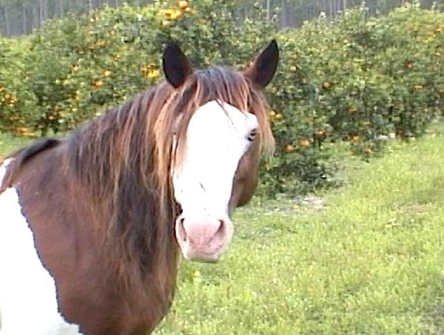 Cavallo-Manara-1024x527  Cavallo-in-America-1-Cortes-1024x746  Cavallo-in-America-Pizzarro-1024x576  Cavallo-in-America-1-C-mustang  Cavallo-in-America-Appaloosa-1024x731  Cavallo-Nunki