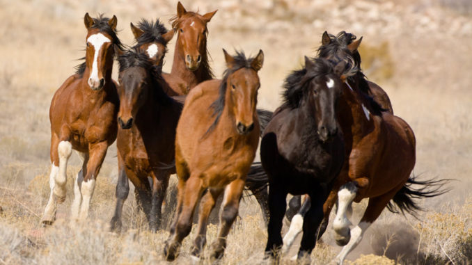 Cavallo-in-America-1-C-mustang-678x381